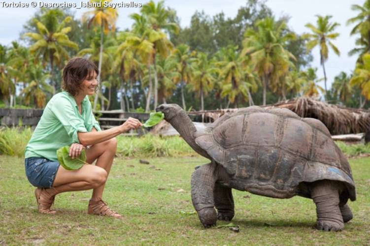 Giant Tortoise at Desroches Island