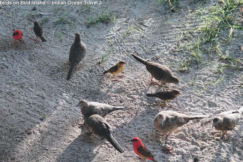 birds on Bird Island